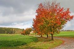 οδικά δέντρα φθινοπώρου Στοκ φωτογραφία με δικαίωμα ελεύθερης χρήσης