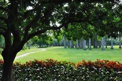 οδικά δέντρα φοινικών πρώτο&u Στοκ Φωτογραφία