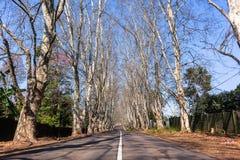 Οδικά δέντρα φυσικά Στοκ φωτογραφία με δικαίωμα ελεύθερης χρήσης