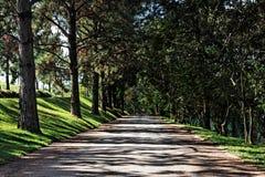 οδικά δέντρα Στοκ Εικόνες