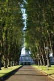 οδικά δέντρα Στοκ εικόνα με δικαίωμα ελεύθερης χρήσης