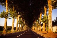 οδικά δέντρα Στοκ Φωτογραφία