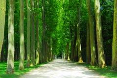 οδικά δέντρα Στοκ φωτογραφίες με δικαίωμα ελεύθερης χρήσης