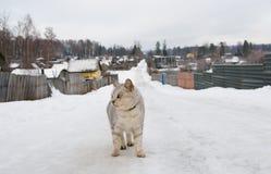 οδικός χειμώνας γατών Στοκ Φωτογραφίες
