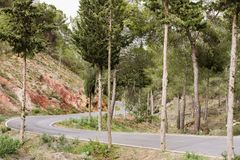 Οδικό δάσος βουνών Στοκ Φωτογραφίες