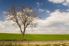 οδικό δέντρο αλεών στοκ φωτογραφία με δικαίωμα ελεύθερης χρήσης
