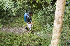 Οδοιπορία ατόμων σε ένα δάσος στοκ εικόνα με δικαίωμα ελεύθερης χρήσης