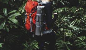 Οδοιπορία ατόμων σε ένα δάσος στοκ εικόνες με δικαίωμα ελεύθερης χρήσης