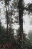 Οδοιπορία γυναικών στη ζούγκλα των ξύλων τροπικών δασών στοκ φωτογραφίες