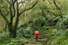 Οδοιπορία γυναικών στο πράσινο suntropical δάσος στοκ εικόνες με δικαίωμα ελεύθερης χρήσης