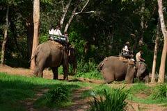 Οδοιπορία ελεφάντων μέσω του chiangmai βόρεια Ταϊλάνδη στρατόπεδων ελεφάντων Maetaman ζουγκλών στοκ φωτογραφία με δικαίωμα ελεύθερης χρήσης