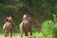 Οδοιπορία ελεφάντων μέσω του chiangmai βόρεια Ταϊλάνδη στρατόπεδων ελεφάντων Maetaman ζουγκλών στοκ φωτογραφίες με δικαίωμα ελεύθερης χρήσης