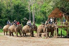 Οδοιπορία ελεφάντων μέσω του chiangmai βόρεια Ταϊλάνδη στρατόπεδων ελεφάντων Maetaman ζουγκλών στοκ φωτογραφία