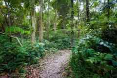 Οδοιπορία ζουγκλών Koh Kradan στοκ φωτογραφίες