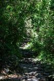 Οδοιπορία περιπέτειας στο ίχνος Inca σε Machu Picchu, Περού στοκ φωτογραφία με δικαίωμα ελεύθερης χρήσης