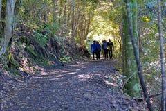 Οδοιπορία τουριστών στο νησί Νέα Ζηλανδία Rangitoto στοκ φωτογραφία με δικαίωμα ελεύθερης χρήσης
