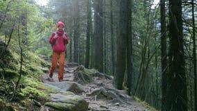 Οδοιπόρος γυναικών με το σακίδιο πλάτης, που φορά στο κόκκινο σακάκι και τα πορτοκαλιά εσώρουχα, που περπατούν στο δάσος στα βουν απόθεμα βίντεο