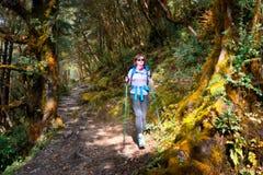 Οδοιπόρος με τον περίπατο σακιδίων πλάτης στο ίχνος βουνών στο δάσος στοκ φωτογραφία