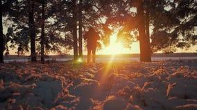 Οδοιπόρος με το σακίδιο πλάτης που περπατά στο δάσος πεύκων που καλύπτεται με το φρέσκο βαθύ χιόνι στο ηλιοβασίλεμα Χαμηλή άποψη  φιλμ μικρού μήκους