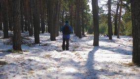 Οδοιπόρος με το σακίδιο πλάτης που περπατά στο δάσος πεύκων που καλύπτεται με το βαθύ χιόνι Χειμερινή δραστηριότητα και έννοια αν απόθεμα βίντεο
