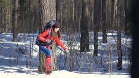 Οδοιπόρος που περπατά μέσω ενός βαθιού χιονιού απόθεμα βίντεο