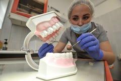Οδοντίατρος γιατρών με το πρότυπο σαγονιών Στοκ Φωτογραφία