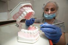 Οδοντίατρος γιατρών με το πρότυπο σαγονιών Στοκ Εικόνες