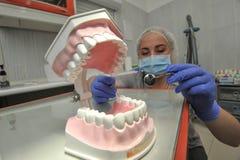 Οδοντίατρος γιατρών με το πρότυπο σαγονιών Στοκ εικόνα με δικαίωμα ελεύθερης χρήσης