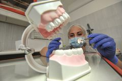 Οδοντίατρος γιατρών με το πρότυπο σαγονιών Στοκ εικόνες με δικαίωμα ελεύθερης χρήσης