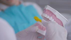 Οδοντίατρος που χρησιμοποιεί τη χλεύη και την οδοντόβουρτσα σαγονιών για να διδάξει τον υπομονετικό σωστό καθαρισμό των δοντιών απόθεμα βίντεο