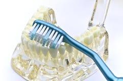 οδοντικό μοντέλο Στοκ Φωτογραφία