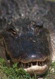 Οδοντωτός Στοκ φωτογραφία με δικαίωμα ελεύθερης χρήσης