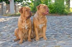 οδός δύο σκυλιών Στοκ Εικόνες
