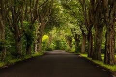 Οδός με τα δέντρα στη Σουηδία Στοκ φωτογραφίες με δικαίωμα ελεύθερης χρήσης