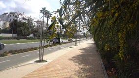 Οδός σε Rishon Lezion στο Ισραήλ φιλμ μικρού μήκους