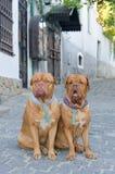 οδός σκυλιών Στοκ Φωτογραφίες