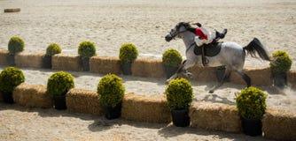 Οθωμανικός ιππέας που οδηγά στο άλογό του Στοκ Φωτογραφία