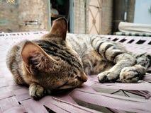 Οικογένεια γατών στο σπίτι Διαφορετικοί τύποι γατών που ζουν εδώ στοκ φωτογραφίες με δικαίωμα ελεύθερης χρήσης