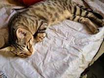Οικογένεια γατών στο σπίτι Διαφορετικοί τύποι γατών που ζουν εδώ στοκ εικόνες με δικαίωμα ελεύθερης χρήσης