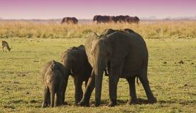 Οικογένεια ελεφάντων Στοκ φωτογραφίες με δικαίωμα ελεύθερης χρήσης