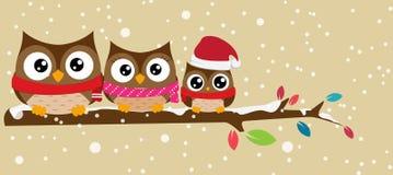 Οικογένεια κουκουβαγιών στο έμβλημα Χριστουγέννων κλάδων Στοκ Φωτογραφίες