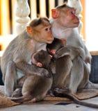 Οικογένεια πιθήκων στοκ φωτογραφία με δικαίωμα ελεύθερης χρήσης