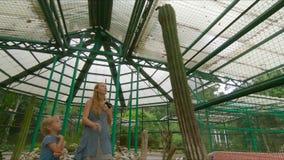 Οικογένεια που επισκέπτεται τους κάκτους, ζώνη κάκτων σε έναν βοτανικό κήπο Pennang, Μαλαισία απόθεμα βίντεο