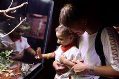 Οικογένεια που προσέχει τον πράσινο βασιλίσκο στοκ φωτογραφίες