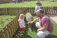 Οικογένεια σε ένα αγρόκτημα, μπαμπάς και παιδιά Στοκ φωτογραφία με δικαίωμα ελεύθερης χρήσης