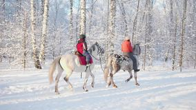 Οικογένεια στο χειμερινό πάρκο, ένας περίπατος στην πλάτη αλόγου Αναβάτης σε ένα άλογο Περίπατος στο καθαρό αέρα φιλμ μικρού μήκους