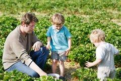 Οικογένεια τριών: πατέρας και αγόρια διδύμων στην οργανική φράουλα μακριά Στοκ Εικόνες