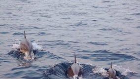 Οικογένεια των δελφινιών που πηδά κοντά σε μια βάρκα φιλμ μικρού μήκους
