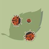 οικογένεια των ladybugs Στοκ φωτογραφίες με δικαίωμα ελεύθερης χρήσης