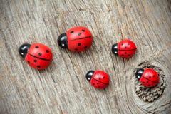 Οικογένεια Ladybugs Στοκ Φωτογραφίες